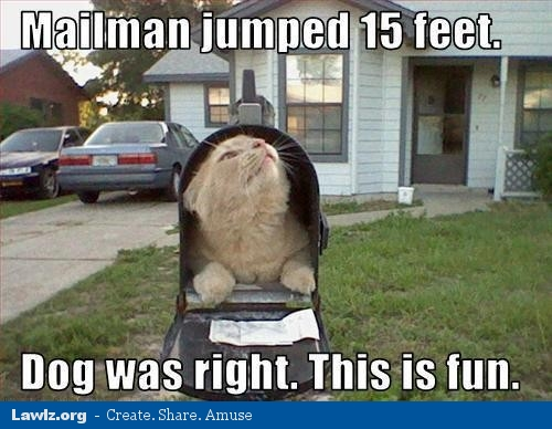 Hahaha Not Funny Meme : Just try not to laugh on pinterest cat birthday cats