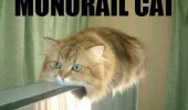 A cat that is rested on a frame. Monorail cat.