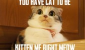 A cat meme with a funny surprised look and wide open eyes. You have cat to be kitten me right meow. You have got to be kidding me right now.