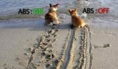 Two dogs being dragged to the water at the beach. ABS: On. ABS: Off.