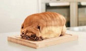 A pug dog that looks like a loaf of bread on the kitchen counter.