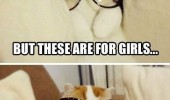 A funny cat picture wearing sunglasses. But these are for girls. Holy crap! I look fabulous.