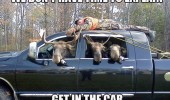 A funny picture meme of three moose drinking beer with a man tied on top of the truck.We don't have time to explain, get in the car.