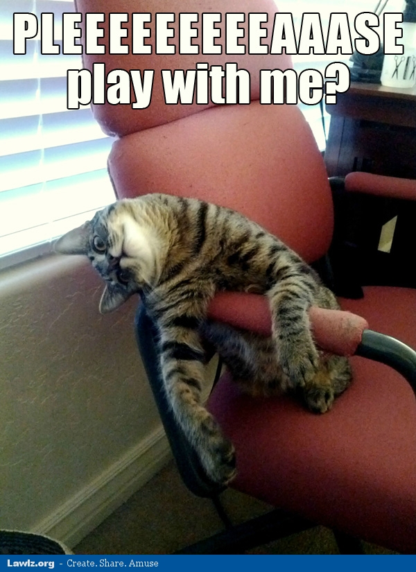 please play with me lol cat meme lawlz laugh out loud on this humor site with funny pictures and,Play With Me Meme