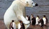 A funny picture of a polar bear disguising itself with a penguin mask in a group of penguins. Seems legit.