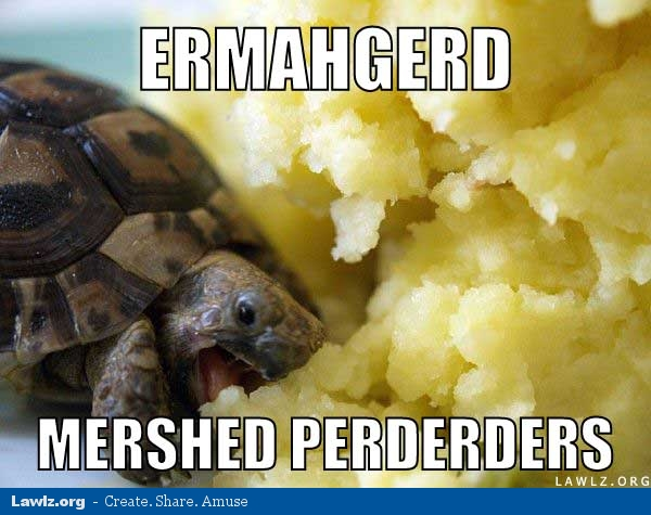 http://www.lawlz.org/wp-content/uploads/2012/06/turtle-meme-ermahgerd-mershed-perderders-eating-mashed-potatoes.jpg