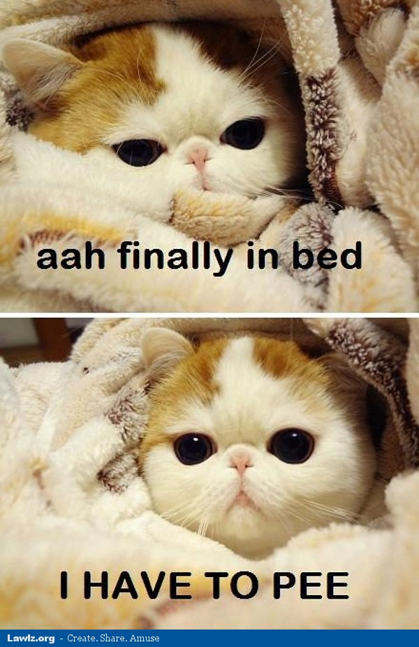 ahh finally in bed i have to pee cat blanket funny meme memes about moggies and other meowers general cat discussion,Cat Blanket Meme