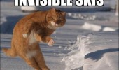 A cat in the snow that looks like it's riding invisible skis.