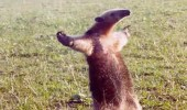 A funny meme of an anteater standing up with both arms in the air. Come at me bro.