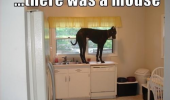 dog-on-kitchen-countertop-meme-there-was-a-mouse