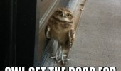 good-day-sir-owl-get-the-door-for-you-meme