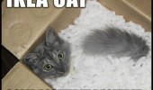 ikea-cat-some-assembly-required-box-meme