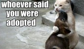 im-gonna-kill-whoever-said-you-were-adopted-cat-dog-meme