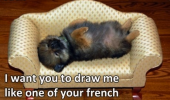 A meme of a puppy dog lying on a little couch like from the scene from the movie Titanic. Jack, I want you to draw me like one of your French girls.