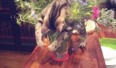 A funny meme of a cat on top of a vase of flowers.Oh flowers you understand me.