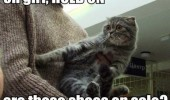 A funny cat meme. Oh girl, hold on, are those shoes on sale?