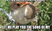 oh-youre-trying-to-sleep-let-me-play-you-the-song-of-my-people-bird-meme