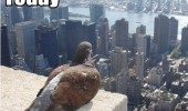 A pigeon bird on a ledge on top of a building looking above the skyscrapers. Who do I crap on today.