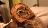 A breading cat meme. A cat with its head through a slice of bread. Fear me, for I am bread.