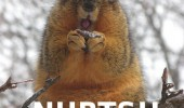 ermahgerd-animals-squirrel-memes-nurts-nuts