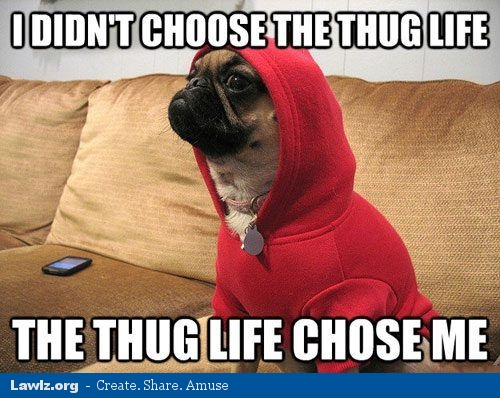 didnt-choose-the-thug-life-the-thug-life-chose-me-pug-dog-red    I Didnt Choose The Thug Life