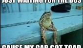 just-waiting-for-the-bus-cause-my-car-got-toad-frog-sitting-meme
