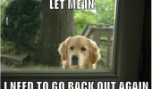 let-me-in-i-need-to-go-back-out-again-pet-dog-meme