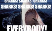 sharks-sharks-everybody-ocean-meme