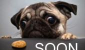 A meme of a sad pug dog looking at a cookie. Soon.