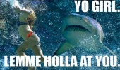 yo-girl-lemme-holla-at-you-shark-meme