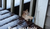 run-you-fools-cat-meme