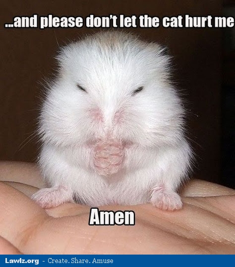 and-please-dont-let-the-cat-hurt-me-amen-hamster-meme.jpg