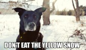 dont-eat-the-yellow-snow-dog-meme