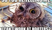 so-youre-telling-me-i-cant-work-at-hooters-owl-bird-meme