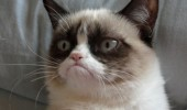 A funny grumpy cat meme. Good morning? No such thing.
