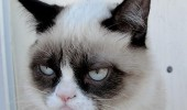 A funny meme of a grumpy cat. I can't wait for the holidays! To be over.