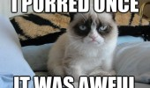 A funny picture of a grumpy cat. I purred once, it was awful.