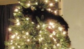 A cat that is climbing on top of a Christmas tree. I approve of this tree.