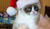 A funny picture of a grumpy cat wearing a Santa hat. Merry Kissmyass (Christmas).