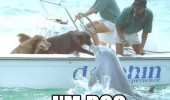 Dogs on a boat near a dolphin jumping out of the water. Pleased to meet you dolphin, I'm dog.