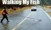 A funny picture of a man walking his fish across the flooded road.