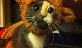 A cute funny picture of a kitten wearing reindeer antlers for Christmas. What do you mean Santa's got enough reindeer.