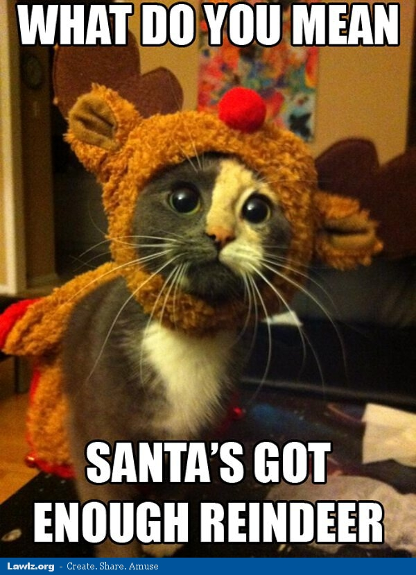 http://www.lawlz.org/wp-content/uploads/2012/12/what-do-you-mean-santas-got-enough-reindeer-christmas-kitten-cat-meme.jpg