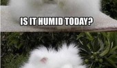 is-it-humid-today-rabbit-bunny-meme