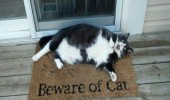 beware-of-cat