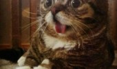 A funny picture of a cat named Lil Bub with its tongue sticking out. Most cats look down at you, questioning your intelligence. Not this one.