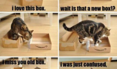 A funny picture of a cat with two boxes. I love this box. Wait is that a new box!? I miss you old box. I was confused, please take me back.