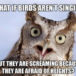 birds singing screaming afraid heights owl meme 150x150 index of wp content uploads 2013 08