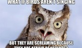 A funny owl meme. What if birds aren't singing, but are screaming because they are afraid of heights?