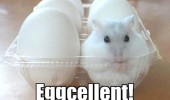 A cute little furry white hamster inside a container full of eggs.